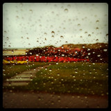 Safe in the comfort of an air conditioned car, typical Scottish summer.