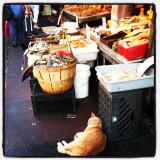 Photo taken in New York City's Chinatown of a tabby cat stationed at a local fish market. 2012.