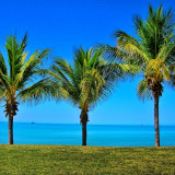 3 palm trees infront of Roebuck Bay, Broome, Western Australia