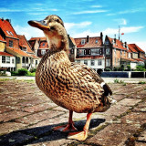 Mega Duck :-) in Enkhuizen, The Netherlands