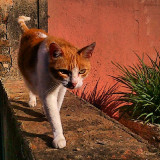 This street cat is from La Colònia Güell near Barcelona, Spain. I was strolling with my kids when we saw this beautiful cat. Then I managed to take this great picture before she disappeared.