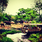 A rainy day safari!