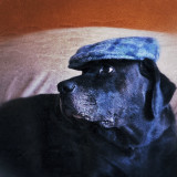Our dog posing with an Irish tweed cap