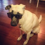 Shelby is a cool dog.