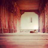 While seeking some interesting points of view to shoot some pics, I came across this great hallway with all the columns emphasizing the perspective and the beautiful dog having a rest.