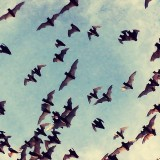 These are the Mexican Free Tailed Bats in Texas at Braken Cave.