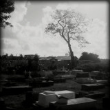 A cemetery in Beliza. May 2010