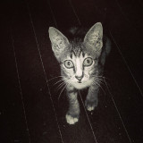 This is my mother in law's kitten. The shot was taken some years ago and unfortunately she was killed by a car after.