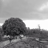 Together we went through a black and white world, and under the tree I realized that I am among the lucky person in the world because it can identify you :')