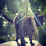 Cat and spider web