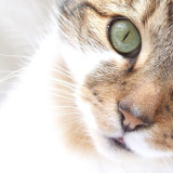 This is our affectionate feline family member who we <3 to bits!