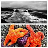 The contrast of color on the Oregon Coast.