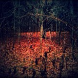 Red leaves in a circle deep in the woods. So beautiful yet strange...