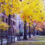 Autumn foliage in city