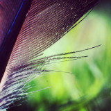 A feather Camera: Sony Nex 5N Lens: Sigma 24mm f2,8 Super-Wide II with reverse ring for macro When you like to, you can visit @___joelandre___'s stream. He takes some great photography.