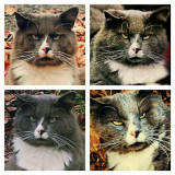Collage of my angry kitty enjoying fall