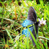 I took this pic at a beautiful place called Lonesome Valley in Cashiers, NC. For some reason, the butterfly was not moving and it willingly let me get very close to take the pic. Almost no zoom.