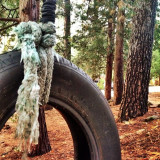 Discovered a tire swing in the forest- play time!