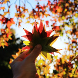 Person holding autumn leaves