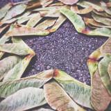 Leaves arranged to leave a star shape