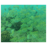 School of Convict Tang