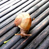 Snail on bamboo