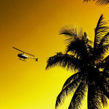 Welcome To My World, The World Of Red Bull  #Helicopter #Palm Tree #Sunset