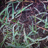 I love the way that this spiderweb catches the dew in the morning.