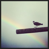 I cant Believe it's real. Got lucky at Carmen creek at main #salmonriver #rainbow #osprey #birdsofprey