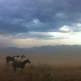 Crazy wind storm. These guys had to brave the sandstorm #nofilter #continentaldivide #horse #horselover #instamountains #salmonidaho #idaho #idahome #ig_daily