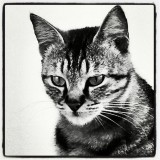 Photo black & white #cat #cat #chat #bw #bianco #nero #bn