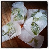 Ice cubes whit mint and melissa leafs.