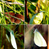 #Schmetterling #Schmetterlinge #butterfly #butterflys #instabutterflys #zoom #superzoom #long #waiting #for #this #amazing #and #lucky #shots #Photographie #photooftheday #picoftheday #pictureoftheday #tagsforlikes #tags4likes #like4like #followme
