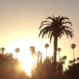 #nofilter #summer #hollywood #cinespia