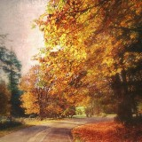 country road in Washington in the fall