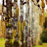 #seeds#hanging#tree#trees#nature#nature_rv#naturealma#naturelover#naturepolis#naturehippys#natureinside#nature_perfection#nature_obsession_unique#macro_ocd#macro#mybestshot#master_shots#mybest_macro#mybest_nature#magic__photography#rsa_nature#rising_masters#royalsnappingartists#team_rebel#live_planet#world_shotz#amateur_united#animazing_nature