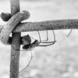 #spider #creepy #fence #blackandwhite #outside #instagood #pictapgo