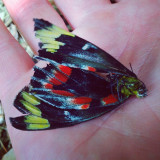 While working in the garden I came across this dead butterfly...a minute silence ensued