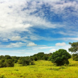 #Nature #Llano #Colombia #iPhone4 #HDR