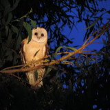 Photos of some owls that I got last night.