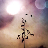 Having taken this shot laying back on my kids Tampoline while holding up this simple little plant against the sky, it's incredible what apps in iPads and iPhones can do to transform simple shots to surreal art.