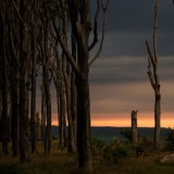 Sunset in ghost forest