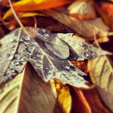 Water drops on #fall #leaves. #random #colorful