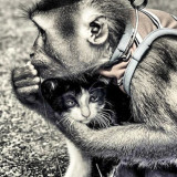 friendship cat and monkey
