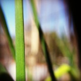 Chives #nature #abstract #creative #green #upclose #lines