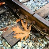 Even the train tracks through town, get decorated with big maple leaves this time of the year! #QualicumBeach #Oceanside #VancouverIsland #BeautifulBC #Canada #MapleLeaves #Maple #TrainTracks #Railroad #Spikes #Rusty #Colourful #Fall #Autumn #Outdoors #Nature #EveningWalk #nofilter #photooftheday #PictureOfTheDay