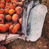 #autumn #pumpkin #ford #vintage #colorado