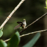 Hummingbird #bird #hummingbird #tiny #cute #small #wings #sony #a77 #alpha #300mm #upstate #newyork
