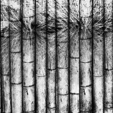 bamboo overhang blended with a drawing of grass