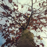 You're gonna see a lot of these #tree #trees #black #and #white #autumn #theme #blue #sky #cloud #clouds #sun #shine #bright #light #park #leaves #branches #live #love #laugh #red #redbridge #london #home